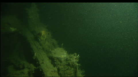 marine organisms cover the sunken wreckage of the steamer portland. - antiquities stock videos & royalty-free footage
