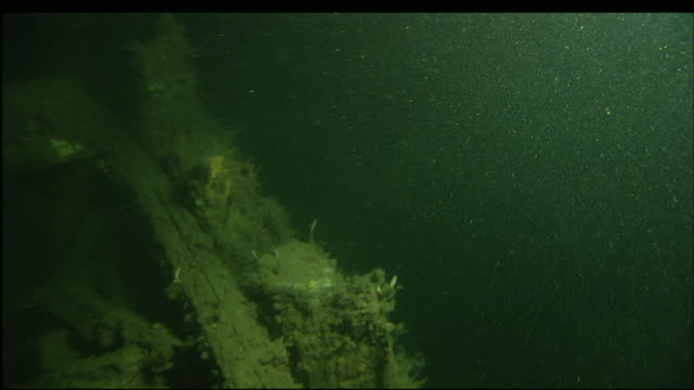 marine organisms cover the sunken wreckage of the steamer portland. - arte dell'antichità video stock e b–roll