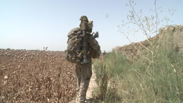 A U.S. Marine rifleman walks on a path between a poppy field and stone wall.