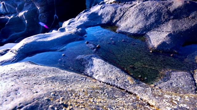 海洋カタツムリ タイムラプス ビデオ - fuerteventrua、アグア ・ ベルデ ビーチ。 - agua点の映像素材/bロール