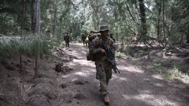 us marines conduct jungle patrols and aerial reconnaissance drills during exercise bougainville i at us army kahuku training area hawaii march 25 2019 - kahuku stock videos & royalty-free footage