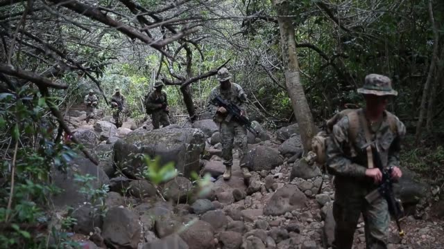 vídeos de stock, filmes e b-roll de us marines conduct jungle patrols and aerial reconnaissance drills during exercise bougainville i at us army kahuku training area hawaii march 25 2019 - arbusto tropical