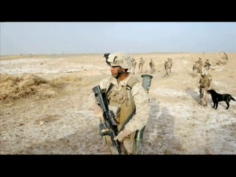 us marines patrolled the outskirts of marjah in helmand province on tuesday with the help of corporals goodwin and brooks labrador dogs whose job is... - us marine corps stock videos & royalty-free footage