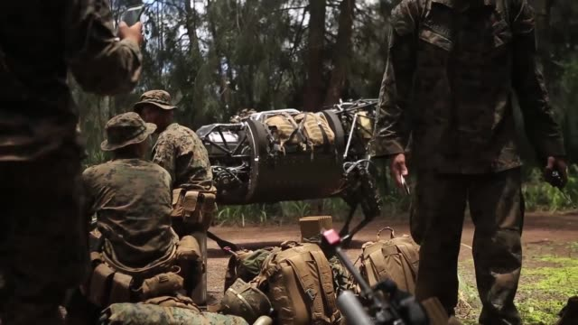 marines with 3rd battalion, 3rd marine regiment conduct combat operations and patrol alongside the legged squad support system on the island of oahu,... - turtle bay hawaii stock videos & royalty-free footage