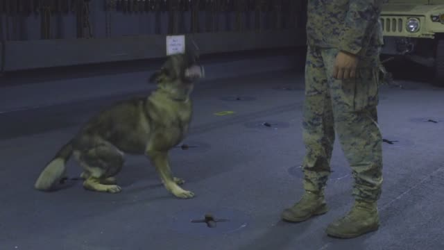 US Marines with the Law Enforcement Detachment 26th Marine Expeditionary Unit conduct various phases of K9 obedience and aggression training aboard...
