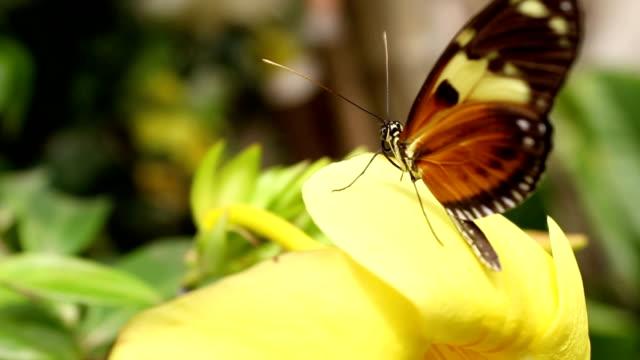vídeos y material grabado en eventos de stock de mariposa buterfly 4 - arboleda