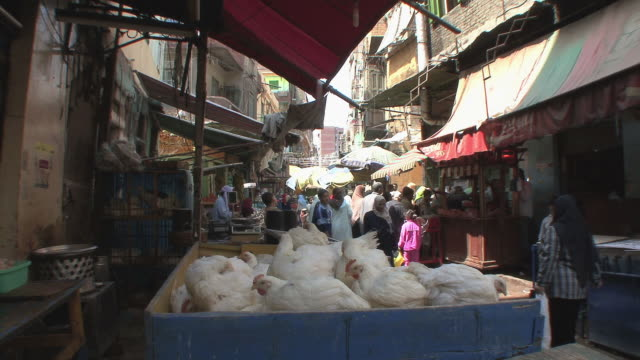 vidéos et rushes de ms market scene with crate full of chickens, alexandria, egypt - alexandrie