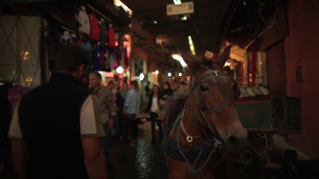 Marrakech souks donkey cart