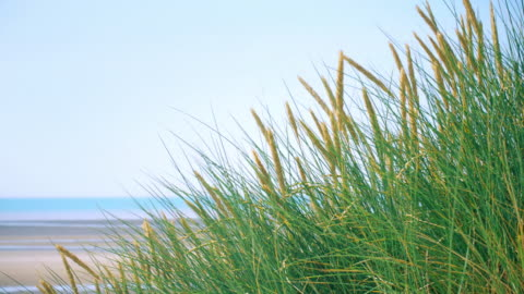 stockvideo's en b-roll-footage met marram gras en blauwe hemel en zee. kopieer ruimte. lockdown. - sea grass plant