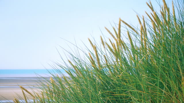 marram grass and blue sky and sea. copy space. lockdown. - sea grass plant video stock e b–roll