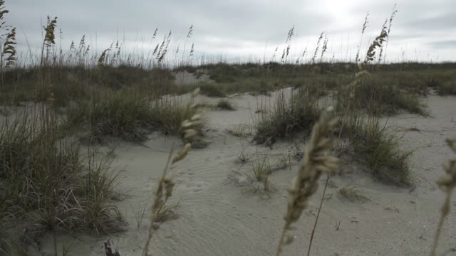 marram grass blows in the wind - marram grass stock videos & royalty-free footage