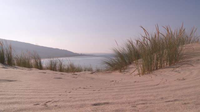marram grass grows in a sand dune in tarifa. - marram grass stock videos and b-roll footage