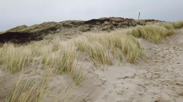 marram grass on a beach during a storm - marram grass stock videos & royalty-free footage
