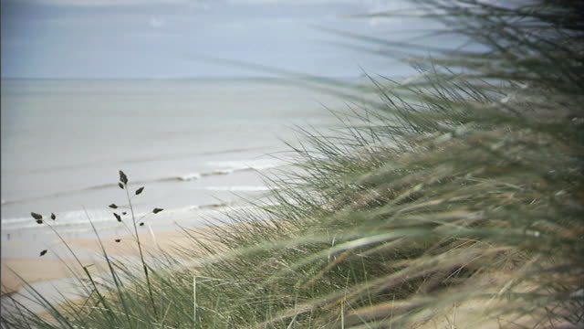 marram grass on side of dune w/ beach north sea below rack focus grasses fg return focus no people protected sites of special scientific interest... - marram grass stock videos and b-roll footage