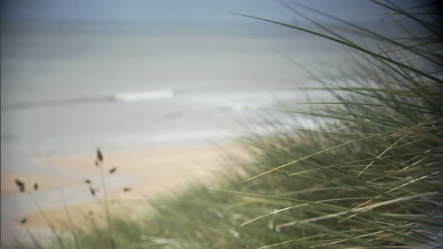 marram grass on side of dune w/ beach north sea below rack focus grasses fg return focus no people protected sites of special scientific interest... - marram grass stock videos & royalty-free footage
