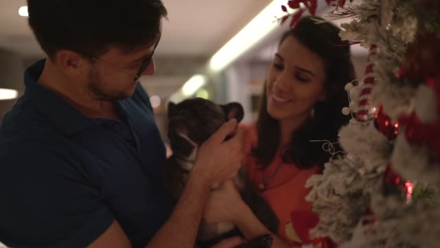 married couple with dog celebrating christmas time at home - decoration stock videos & royalty-free footage