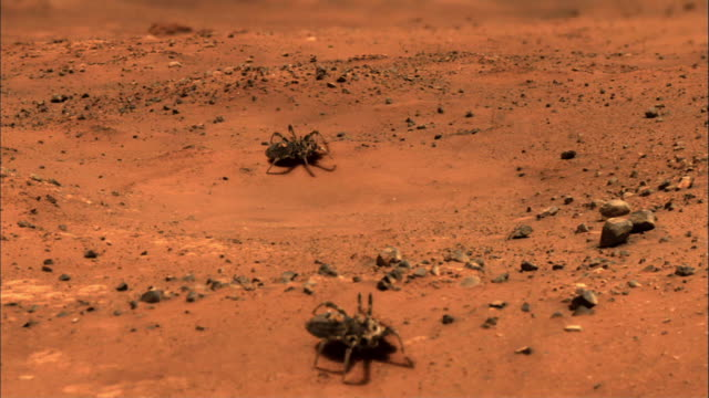 Mars robot - spider (Animation)