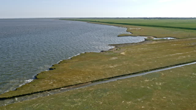 aerial marsh along a coastline in sunshine - coastline stock videos & royalty-free footage