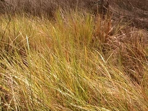 vídeos y material grabado en eventos de stock de marsh hierba - árbol tropical
