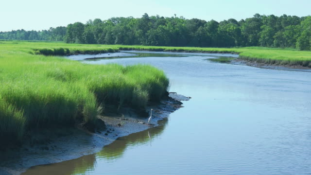marsh landscape and dennis creek in cape may new jersey usa - great egret stock videos & royalty-free footage