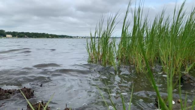 marsh water - virginia beach stock videos & royalty-free footage