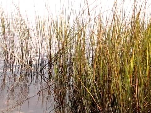 vídeos y material grabado en eventos de stock de marshgrass - árbol tropical