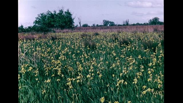 marshland w/ reeds fg. angled mediterranean sea w/ small waves & beach, field of yellow wildflowers, vs berries, purple iris flowers, pale yellow... - iris plant stock videos & royalty-free footage