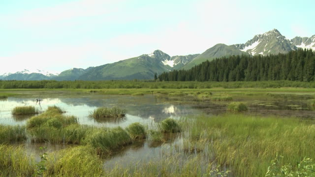 """marshy lake with forest and snow capped mountains in background, between seward and homer, kenai peninsula, alaska."" - kenai stock videos & royalty-free footage"