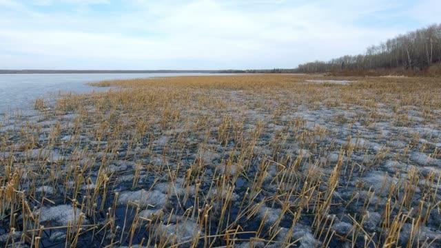 stockvideo's en b-roll-footage met marshy lakeshore - moeras