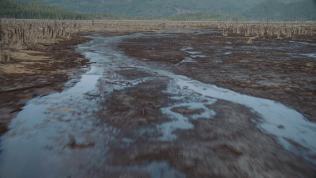 aerial marshy land dotted with dead trees and slough with snow-capped mountain range surrounding - レターボックス点の映像素材/bロール