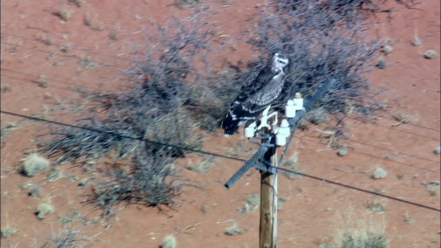 martial eagle on telegraph pole - aerial view - northern cape,  south africa - telegraph stock videos & royalty-free footage
