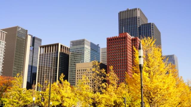 marunouchi high-rise office buildings stand behind the rows of autumn leaves ginkgo trees along the gyoko-dori at marunouchi tokyo japan on november 21 2017. - marunouchi stock videos & royalty-free footage
