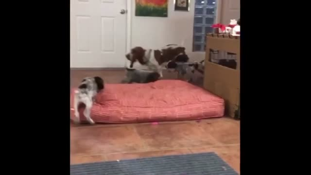 marzi the basset hound is very good at keeping the pups entertained look at how much fun they're having - hound stock videos & royalty-free footage