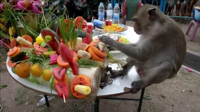 mas de 2.000 kilos de fruta y verdura para agradecer a los monos tailandeses por atraer al turismo un banquete que tiene lugar el ultimo domingo de... - fruta stock videos & royalty-free footage