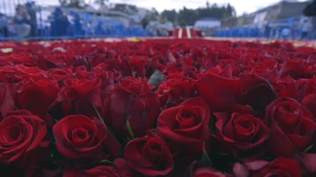 mas de 500000 rosas de radiantes colores producidas en ecuador dieron forma a una gigantesca piramide con la que la localidad andina de tabacundo... - afp stock videos & royalty-free footage