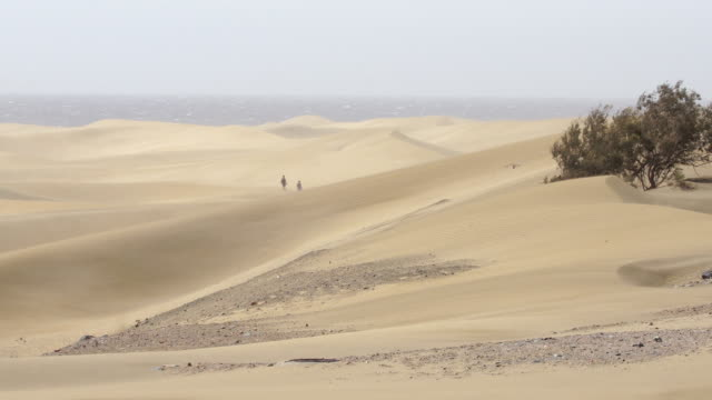 mas palomas dunes a windy day - grand canary - grand canary stock videos & royalty-free footage