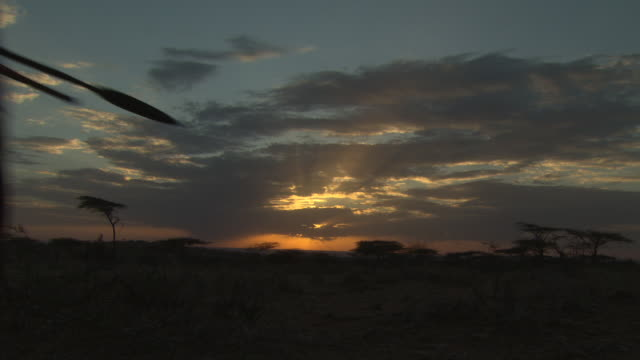 masai and samburu warriors walk in to sunset, kenya - krieger menschliche tätigkeit stock-videos und b-roll-filmmaterial
