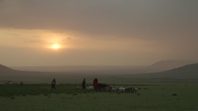 masai farmers herd goats across the serengeti national park. - masai stock videos and b-roll footage