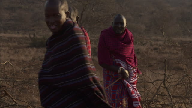 masai men and women drag acacia branches across a dry field. - indigenous culture stock videos & royalty-free footage