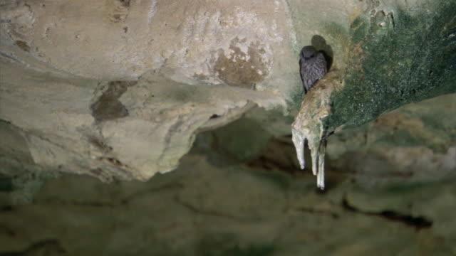 vídeos de stock, filmes e b-roll de mascarene martin (phedina borbonica) perched in mitoho cave, madagascar - grotto cave