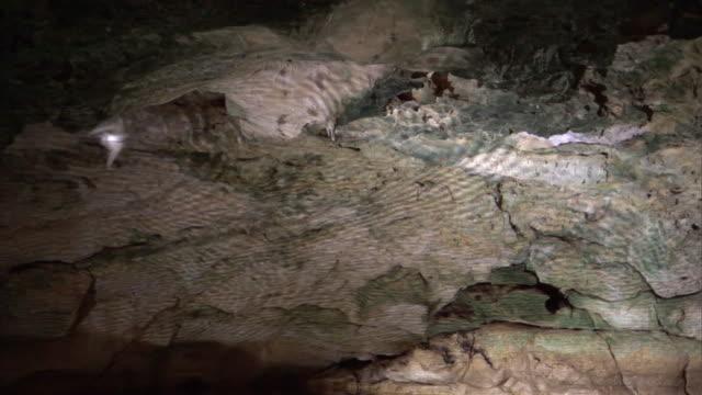 vídeos de stock, filmes e b-roll de mascarene martins (phedina borbonica) fly in mitoho cave, madagascar - grotto cave