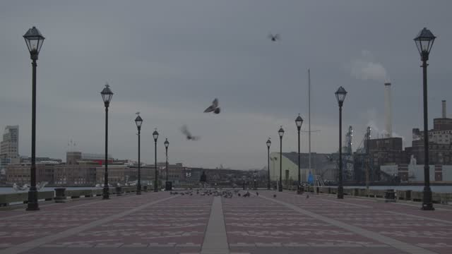 masked man walks as pigeons take flight by the inner harbor during the coronavirus pandemic on january 8, 2021 in baltimore, maryland. the united... - infectious disease stock videos & royalty-free footage