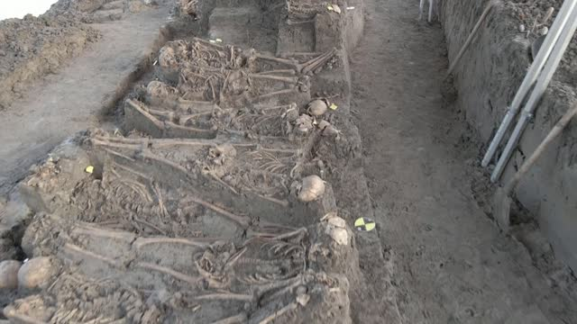 mass grave of 81 british soldiers uncovered 200 years after their deaths; netherlands: vianen: ext various of archaeologists excavating skeletons at... - digging stock videos & royalty-free footage