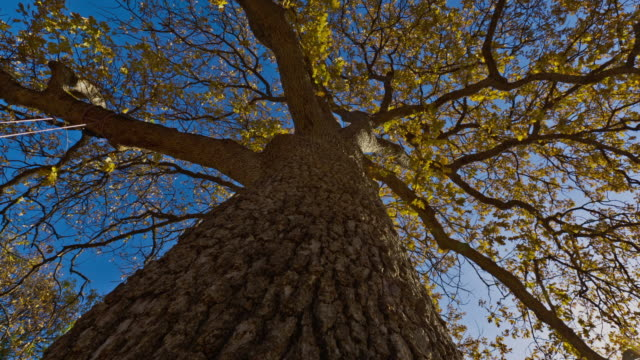 A massive autumn tree frames a bright blue sky.