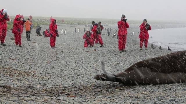 a massive bull beach master southern elephant seal mirounga leonina at jason harbour south georgia antarctica with tourists from an expedtion cruise... - elefante marino del sud video stock e b–roll