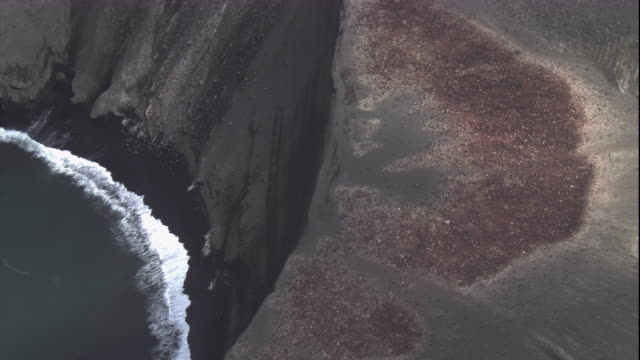 a massive chinstrap penguin colony crowds the edge of a cliff in antarctica. available in hd - pinguin stock-videos und b-roll-filmmaterial