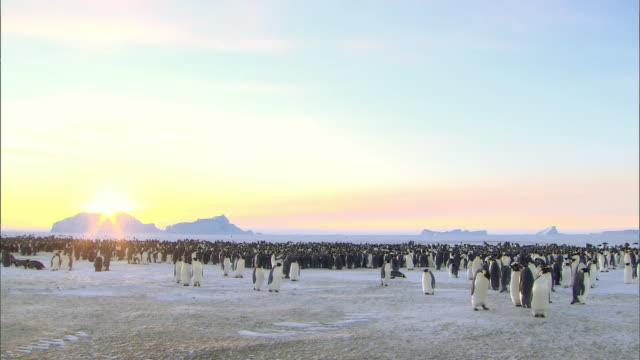 vídeos de stock e filmes b-roll de massive colony of emperor penguins and landscape of antarctica at sunset - colony