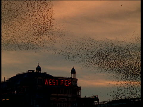 "vídeos de stock, filmes e b-roll de massive flock of starlings swarm over old brighton pier with ""west pier"" in red neon at sunset - memórias"
