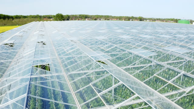 aerial massive greenhouse for growing tomato next to a highway - greenhouse stock videos & royalty-free footage