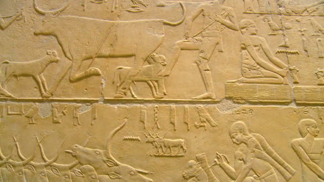 ms td mastaba interior and ancient relief's at saqqara archeological site / saqqara, egypt - relief emotion stock videos and b-roll footage